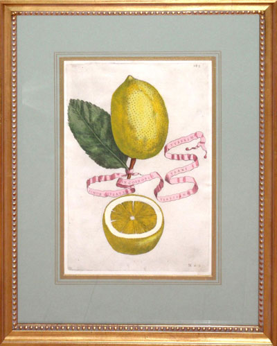 Wall Art: Plat 283 - Limon Citratvs in Coenobi Teresiano Trans Tyberim