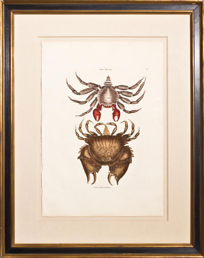 Wall Art: The Red-Mottled Crab