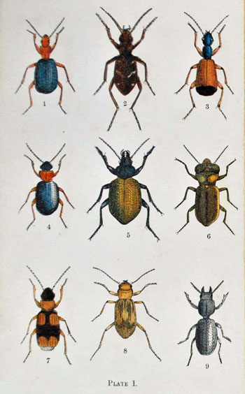 Common British Beetles