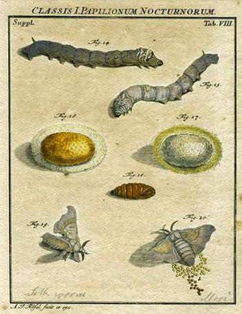Classis I. Papilionum Nocturnorum
