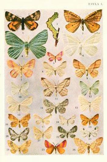 Våra fjärilar och hur man känner igen dem