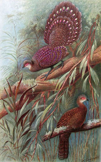 The Game Birds of India