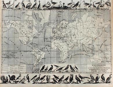 Weltkarte zur Übersicht der jährlichen Wanderungen der Fische und Vögel