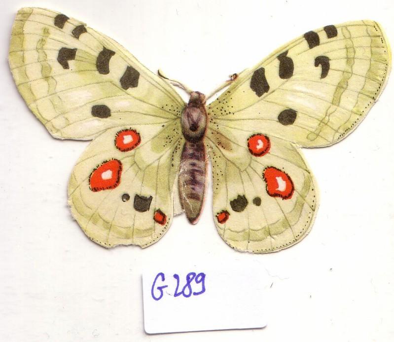 Glanzbild Schmetterling