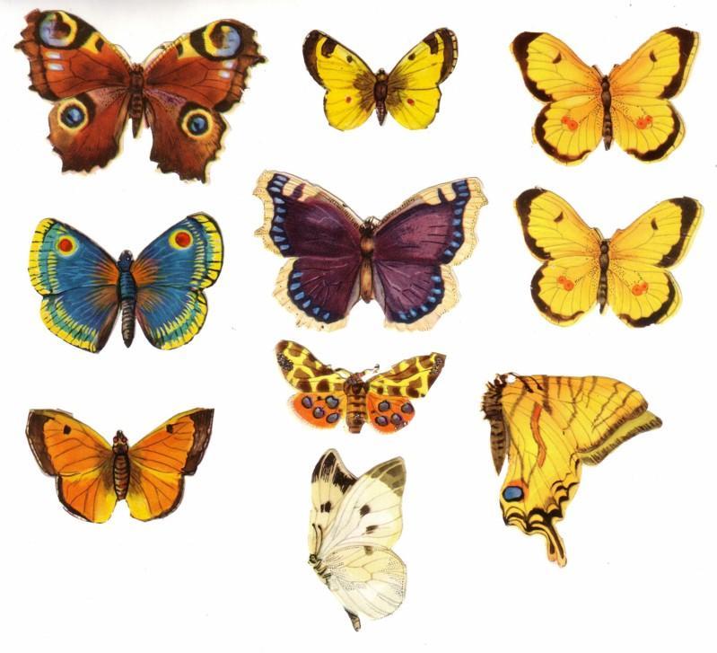 Glanzbild Schmetterlinge