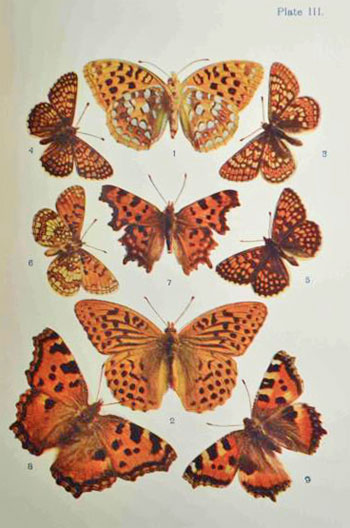 Butterflies, moths, other insects and creatures of the countryside