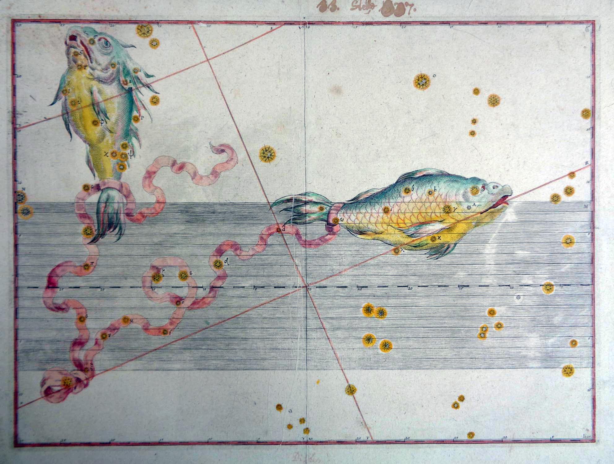 Fische aus Uranometria, omnium asterismorum continens schemata