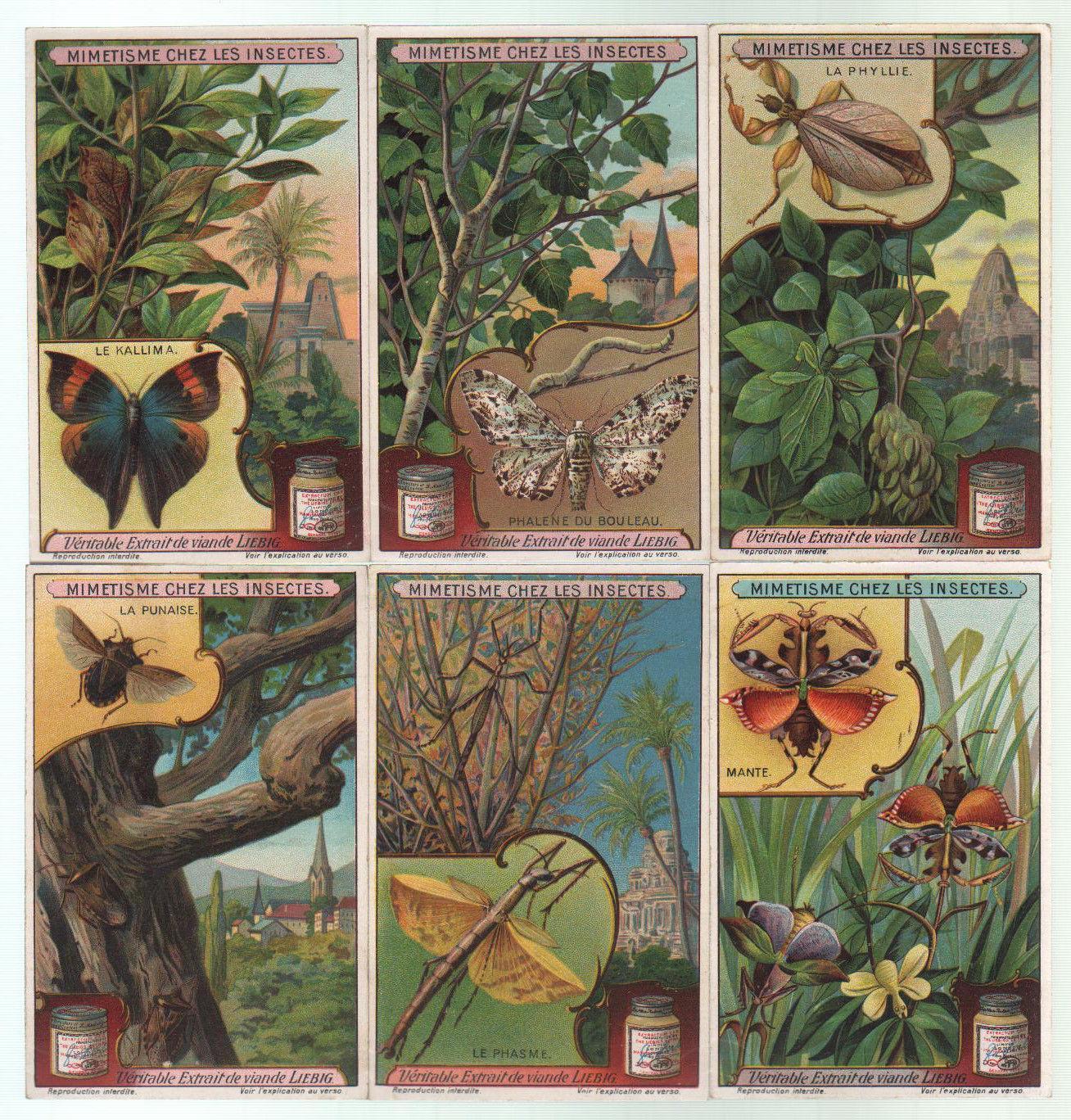 Liebig Sammelbilder Insekten